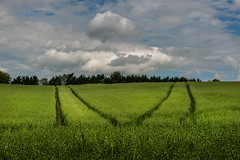 M (George Plakides) Tags: fields green sky clouds tractorlines