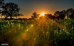 T'as du flare . ('aNtOiNe') Tags: antoine antoinepillaud 87 87400 d800 nikon sunrise sunset 35mm 35 stléonarddenoblat sun