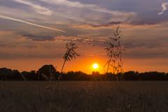 Corn at Sunset (yasjooni) Tags: nikon nikond7200 sun sunset southend lowlight landscape sky clouds