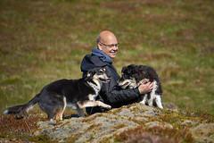19-july-kotlugengi-patterson_117 (Stefán H. Kristinsson) Tags: dogs hundar hundur playing reykjanes july júlí 2018 nikond800 nikon70200f4 sunny summer
