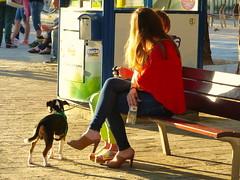 Atardecer en Castelldefels (Felipe Sérvulo) Tags: atardecer crepúsculo chicas perro personas zapatos luces sunset