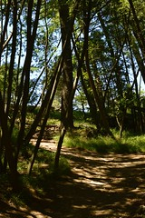 Almost There (JustinPhiIIips) Tags: outdoors nature hike path trail joaquin miller park san fransisco bay area forest late spring trees adventure travel explore 35mm nikon d3200