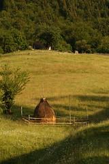 Traditional Romanian Haystack (Derbyshire Harrier) Tags: haystack traditional magura 2018 nationalparkofpiatracraiului naturetrek summer transylvania romania farming meadow rural