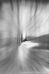 Una fada volant pel bosc en un dia gris.  (Arbúcies - Montseny . Catalunya)                                                       Model: Svetlana T.  (Rùssia).         Primer Premi Concurs Nacional de Fotografia d'Arbúcies Tema :  Lliure. (Antoni G.V.) Tags: antoni gallart svetlana rússia rusia russia nikon d800 bosc bosque forest hada fada fairy flying volar volant volando fluor bn bw abstrac abstracto abstracte montseny arbúcies catalonia catalunya cataluña competition competición competició primer premi primerpremio girl modelo model chica noia