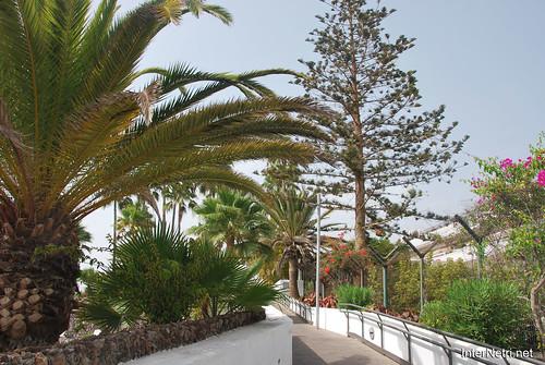 Готель Хардін Тропікаль, Тенеріфе, Канари  InterNetri  377