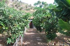 Канарський сад-город, Гомера, Канарські острови  InterNetri  0655
