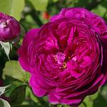 Thésée-la-Romaine (Loir-et-Cher) thumbnail