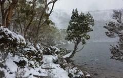 Lake Dobson, Mt Field National Park. (jenni 101) Tags: sigmaartseries tasmania lakedobson snow mtfieldnationalpark winterwonderland photographybyjen nikond7200