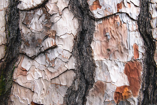 Layers of bark