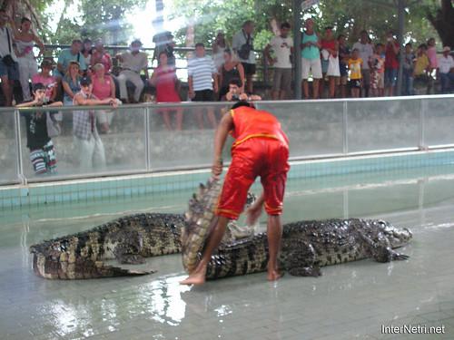 В пащу крокодилу Паттайя Таїланд Thailand InterNetri 38