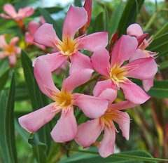 Pink and yellow (Steve4343) Tags: steve4343 nikon 7200 appalachian trail cherokee national forest red green blue yellow orange white clouds sky beautiful tennessee autumn beauty johnson county lake watauga cloud colorful woods garden gardens happy leaves rocks wildlife landscape mountain tree trees grass water wood butler summer spring macro flower flowers at