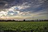 Huerta de Chufa (chelocatala) Tags: cielo nubes atardecer huerta planta chufa valencia alboraya españa