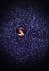 Jardin (Zorha Nightwood) Tags: doll pullip groove junplanning obitsu fullcustom wig photoshop olympus