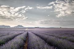 Plateau de Valensole (alexanderkoch) Tags: fotoreiserei landscape outdoor provence workshop ballon sonne wolken france frankreich landschaft lavendel lavender blüte feld reihe