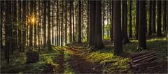 Morgendlicher Wald (Robbi Metz) Tags: deutschland germany bayern bavaria landscape forest trees sunrise sun way colors canoneos