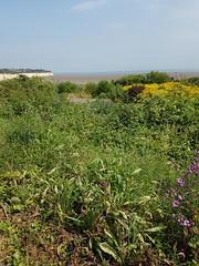 Saturday, 7th, Looking across the bay 7th July (tomylees) Tags: saturday 7th july 2018 pegwellbay kent ramsgate project 365