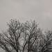 Birds on treetop