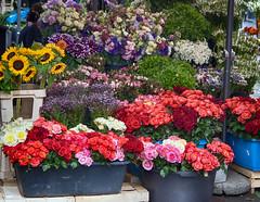 Каленићева пијаца (3OPAHA) Tags: explore flower market