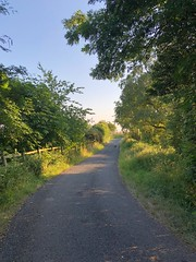 Evening sun on a country lane - Lindley, North Yorkshire (mikeyashworth) Tags: mikeashworthcollection lindley eveningsun landscape lane 2018