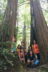 Big Basin Redwood State Park, Santa Cruz, CA (radioflyer007) Tags: bouldercreek california unitedstates hiking redwood bigbasin tree family cousins