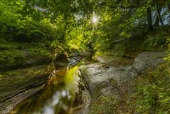 Sunlit Gelt. (CamraMan.) Tags: rivergelt trees cover sunlit river cumbria nature lowgeltbridge sonya7 canon1740mmlusm ©davidliddle ©camraman fotodiox