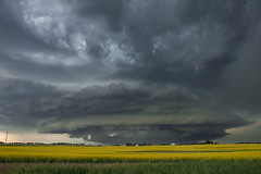 Storm Coming (gina_blank) Tags: supercell thunderstorm storm alberta abstorm abwx weather rural prairie canola farm yellow clouds sky horizon landscape raincloud outdoor outdoors field barn grainshed explore