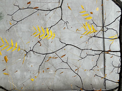 Walls - Autumn (vavan) Tags: branches autumn