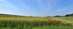 Promesses des moissons (Diegojack) Tags: senarclens vaud suisse d7200 campagne paysages panorama champs cultures fleurs coquelicots gollion groupenuagesetciel