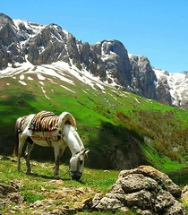 KURDISTAN (Kurdistan Photo كوردستان) Tags: kurdistan کوردستان land democratic party koerdistan kurdistani kurdistán kurdistanê zagros zoregva zazaki zaxo zindî azadî azmar xebat xaneqînê christianity cegerxwin van love mahabad music arbil democracy freedom genocide herêmakurdistanê hawler hewler hewlêr halabja herêma judaism jerusalem kurdistan4all lalish qamishli qamislo qamishlî qasimlo war erbil efrînê refugee revolution rojava referendum yezidism yazidis yârsânism unhcr peshmerga peshmerge كوردستاني portrait tree sky grass
