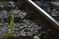 DSC_5184 (emina.knezevic) Tags: weed railroad pruga dorcol beograd belgrade oldrailroad train rock wood streetphotography