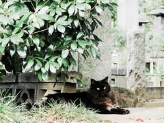 neko-neko2131 (kuro-gin) Tags: cat cats animal japan snap street straycat 猫 canon powershot pro1