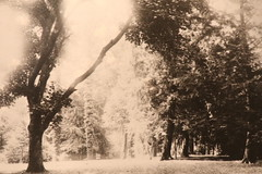 Peirce's Park, c. late 1800's (Itinerant Wanderer) Tags: pennsylvania chestercounty longwoodgardens