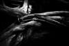 Mangled (p_v a l d i v i e s o) Tags: wood ef24105mmf4 naked porn deadtree bark moody botanicalgarden lowkey canoneos5dmarkiii entangled monochrome dark dead fallen polarizingfilter sad flesh roots zoomed detail 24105mm 5d3 canon5d canon5dmk3 canonef24105mmf4lisusm bw blackandwhite monocromatico monocromatique monocromático lisboa amlisboa portugal pt