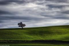 Lieve (SDB79) Tags: molise grano campagna ururi albero paesaggio terra nuvole
