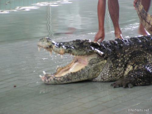 В пащу крокодилу Паттайя Таїланд Thailand InterNetri 10