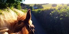 #equine #equestrian  #clara (citruslime24) Tags: clara equestrian equine potential