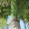 New Life (soniaadammurray - On & Off) Tags: digitalphotography tree birth growing new life palmtree reflections shadows sky nature treemendoustuesdays artchallenge green exterior
