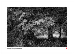 There sleeps Titania sometime of the night.... (Chalky666) Tags: tree trees wood woodland forest southdowns westsussex landscape art mono