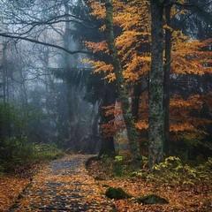 Photo (_BreezyAutumn_) Tags: autumn breeze