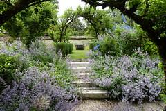 Floral Cascade (richwall100 - Thank you for Three Million views) Tags: gardens cranbornemanor flowers steps arches dorset cranborne uk