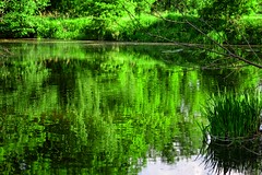 The color green (Tobi_2008) Tags: wald forest grün green natur nature landschaft landscape sachsen saxony deutschland germany allemagne germania teich pond spiegelung reflection