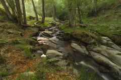 En el bosque. (Amparo Hervella) Tags: puertodecanencia comunidaddemadrid españa spain agua naturaleza bosque río largaexposición d7000 nikon nikond7000