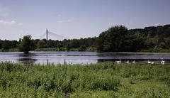 Eijsden (Theo Bauhuis) Tags: eijsden limburg water netherlands sky blue bridge brug swan