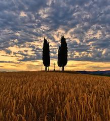 San Quirico D'Orcia at sunrise (Alona Azaria) Tags: cross sanquiricodorcia sunrise wheatfields croce cypresi cypresses nikon nikkor d800 1635mmf4 alba