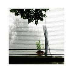 Conversation (hélène chantemerle) Tags: mur feuillage plante ville urbain ombre wall foliage sole city urban shadow