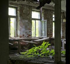 Leuchtfarn (david_drei) Tags: fern farn lostplace decay abandoned
