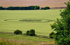 Crop Circle (rustyruth1959) Tags: flattenedcrops geometric pattern geometricpatterns southernengland field manmade cropcircles tree outdoor grass boards ropes aliens landscape circles crops cropcircle winterbournemonkton herefordshire england uk tamron16300mm nikond5600 nikon
