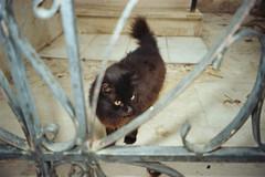 (Just A Stray Cat) Tags: kodak proimage pro image 100 cat cats kitty kittens gato feline stray strays 35mm 35 mm film analog analogue olympus mju ii stylus epic
