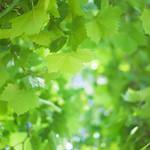 Green Summer Leafs thumbnail