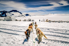 Dog Sledding in Skagway (todd.falasco) Tags: alaska snow dog sledding sky mountain glacier landscape